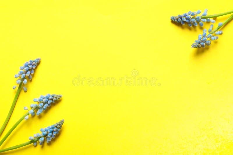 Рамка сделанная из цветков muscari весны на предпосылке цвета, взгляде сверху стоковое изображение