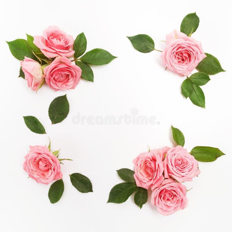 Рамка сделанная розовых роз, зеленых листьев, ветвей, цветочного узора на белой предпосылке Плоское положение, взгляд сверху стоковое изображение