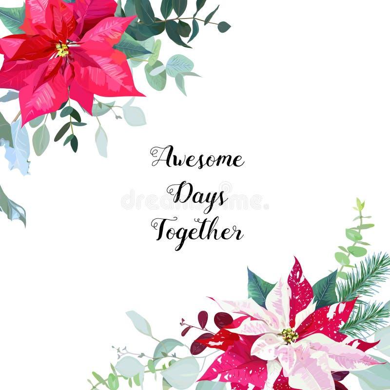 Рамка сезонного угла флористическая с смешанными букетами poinsettia иллюстрация штока