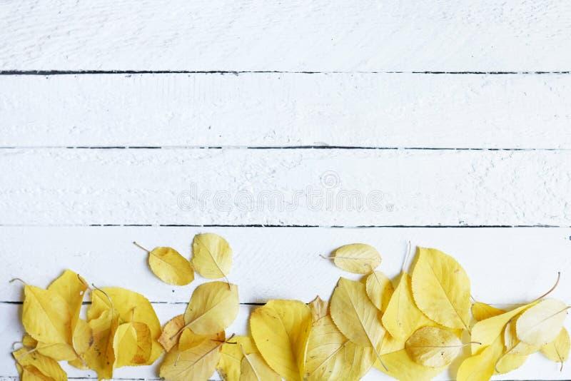 Рамка состава плана осени сухих листьев на белой предпосылке, плоском положении, взгляде сверху, космосе экземпляра стоковые фото