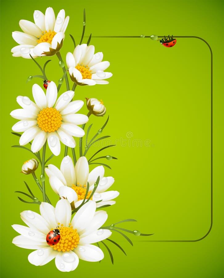 рамка стоцвета иллюстрация вектора