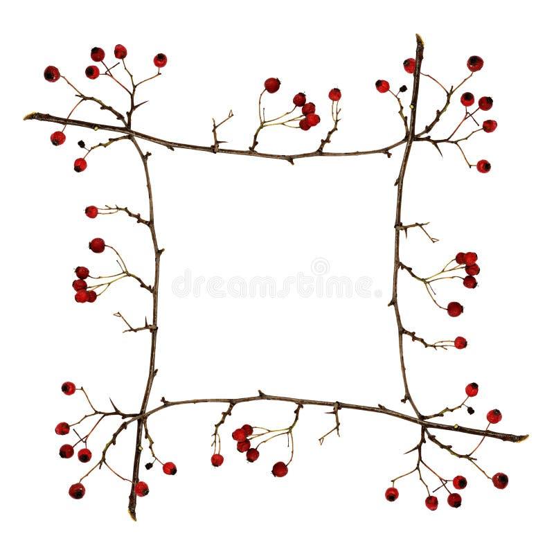 Рамка сделанная от сухих хворостин с красными ягодами стоковая фотография rf