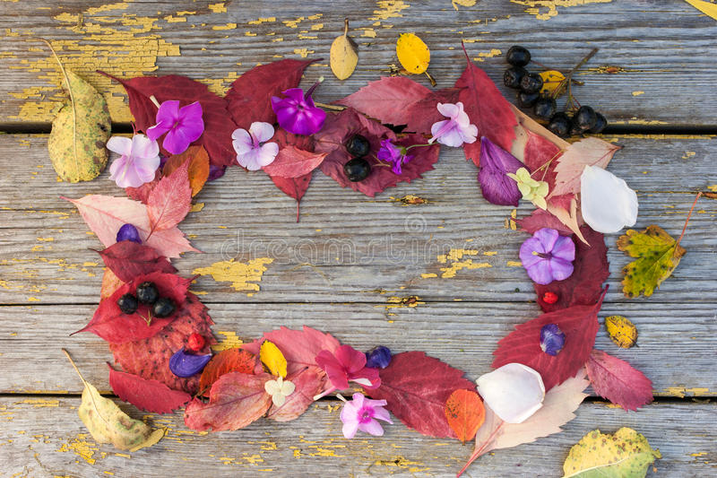 Рамка сделанная различных листьев, цветков и ягод стоковое фото