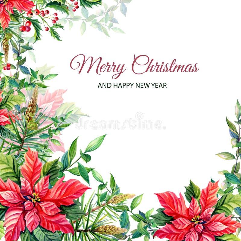 Рамка с красными цветками poinsettia, падуб веселого рождества акварели, листья, ягоды, сосна, спрус, зеленые хворостины иллюстрация вектора