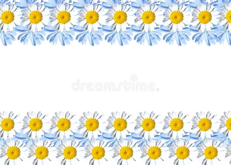 Рамка с маргаритками и цикорием иллюстрация штока