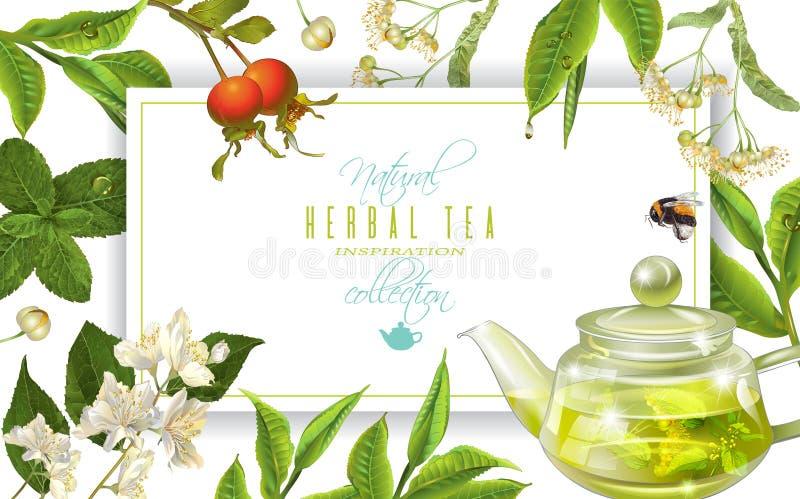 Рамка травяного чая иллюстрация штока