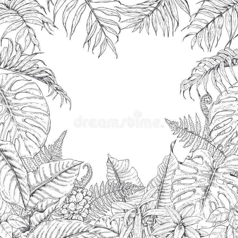 Рамка тропических заводов иллюстрация штока