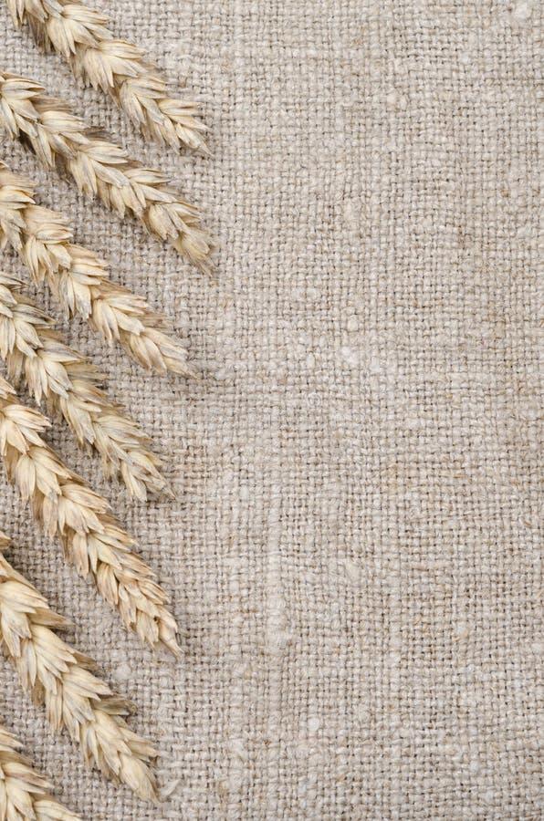 Рамка ушей пшеницы на предпосылке мешковины стоковые фото