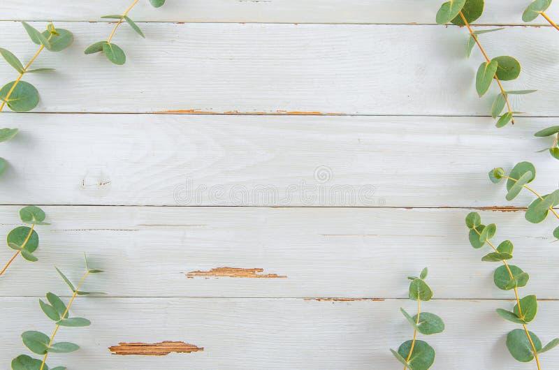 Рамка флористического эвкалипта взгляда сверху плоская положенная на белой деревенской древесине стоковое фото