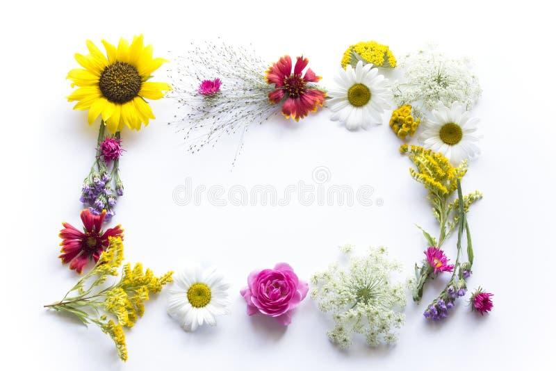 Рамка цветков лета на белой предпосылке стоковые фотографии rf