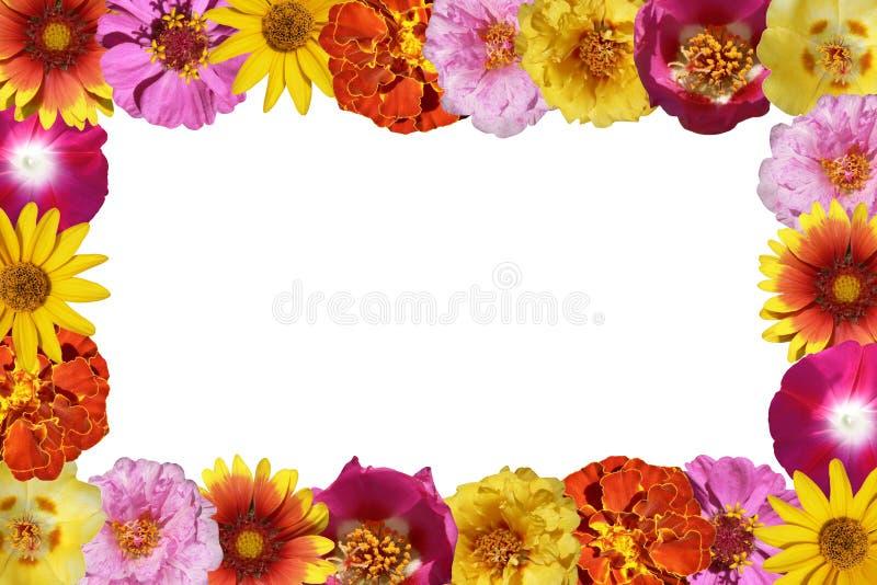 рамка цветков стоковые изображения