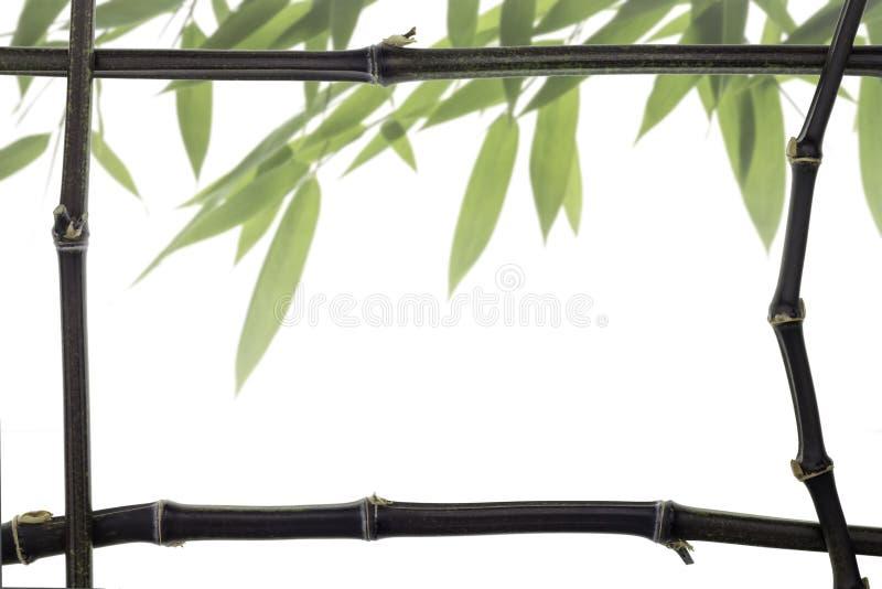 Рамка черного бамбука с листьями стоковая фотография rf