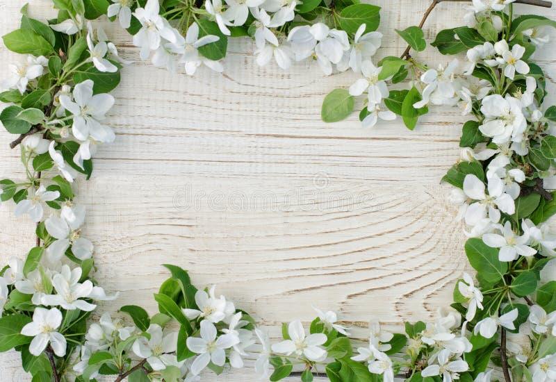 Рамка яблока цветет на белой деревянной предпосылке Взгляд сверху, космос для текста стоковые фото