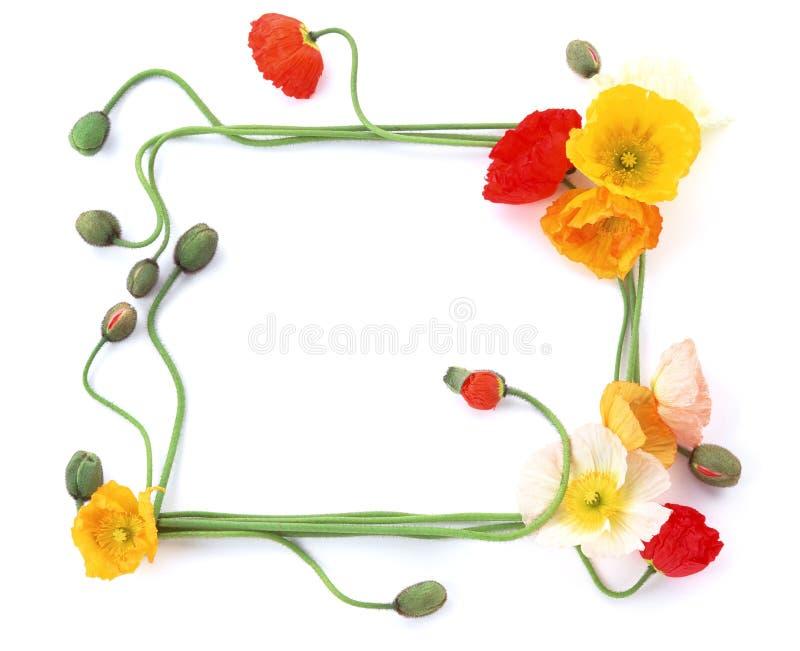 рамка 2 цветков стоковое изображение