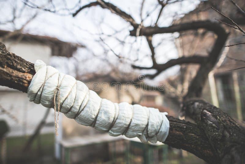 Раненая ветвь дерева стоковое изображение rf