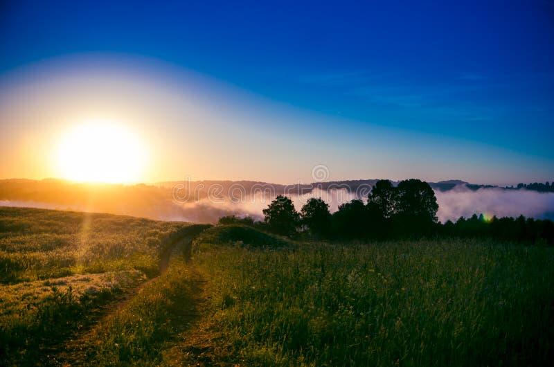 Раннее утро лес пряча в тумане путь леса стоковое изображение