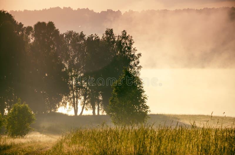 Раннее утро лес пряча в тумане путь леса стоковое фото rf