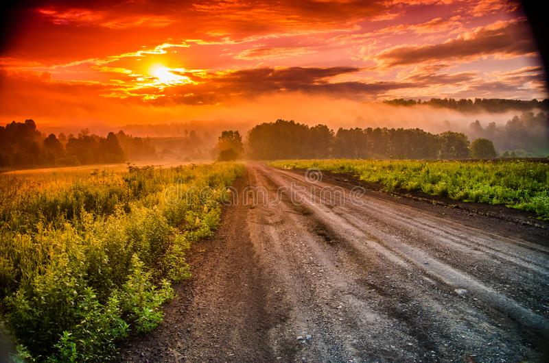 Раннее утро лес пряча в тумане путь леса стоковая фотография rf