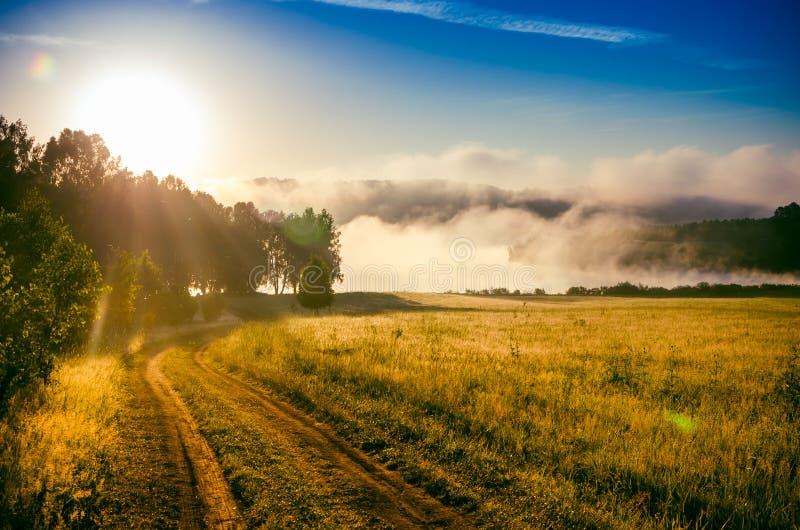 Раннее утро лес пряча в тумане путь леса стоковые изображения rf