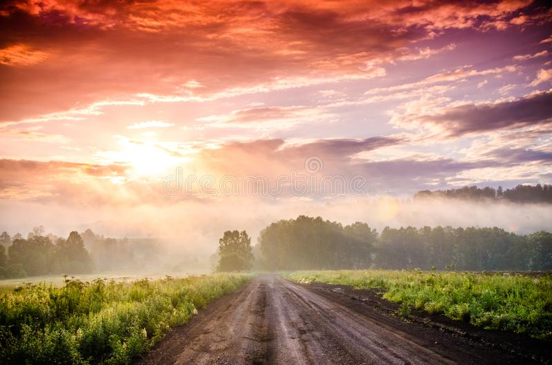 Раннее утро лес пряча в тумане путь леса стоковые изображения