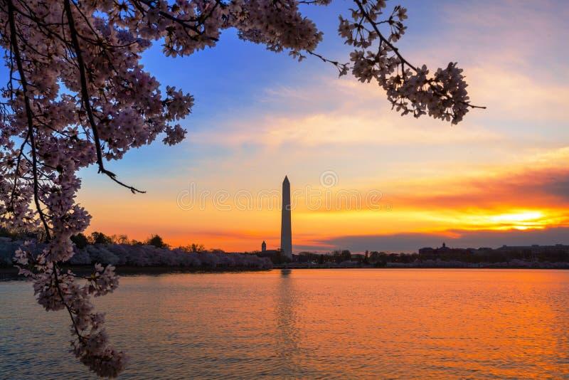 Раннее утро на приливном тазе в DC Вашингтона, во время фестиваля вишневого цвета с памятником на другой стороне стоковая фотография