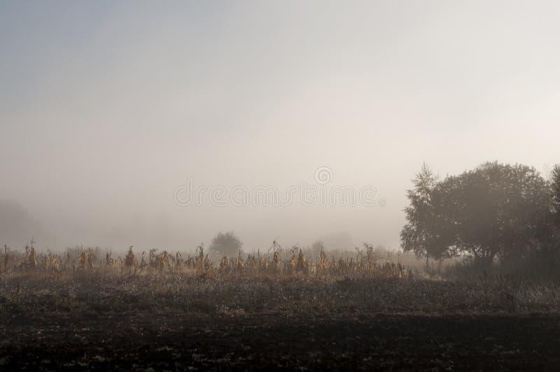 Рано утром в поле с туманом осени и падениями воды в воздухе Подкраски коричневого цвета Ничего смогло видеть далеко Beauti стоковое фото