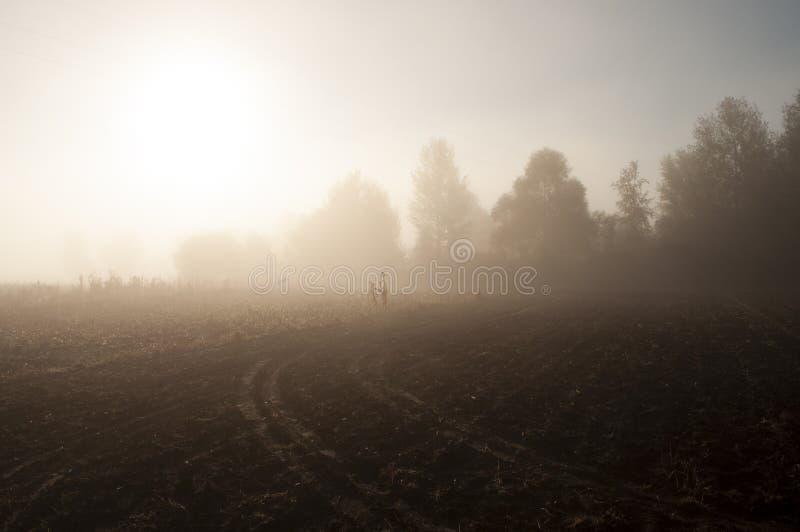 Рано утром в поле с туманом осени и падениями воды в воздухе Подкраски коричневого цвета Ничего смогло видеть далеко Beauti стоковое изображение rf