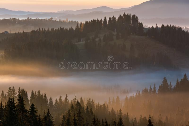 Рано утром гора туманной осени прикарпатская, Украина стоковые фотографии rf