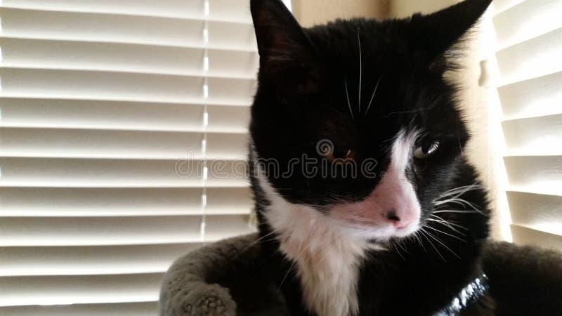 Рано утром кошачий стоковое фото