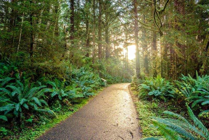 Рано утром с восходом солнца в тропическом лесе стоковое фото rf