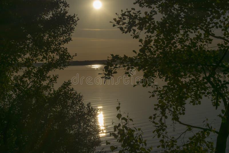 Рано утром fog с восходом солнца за деревьями в лесе стоковое фото