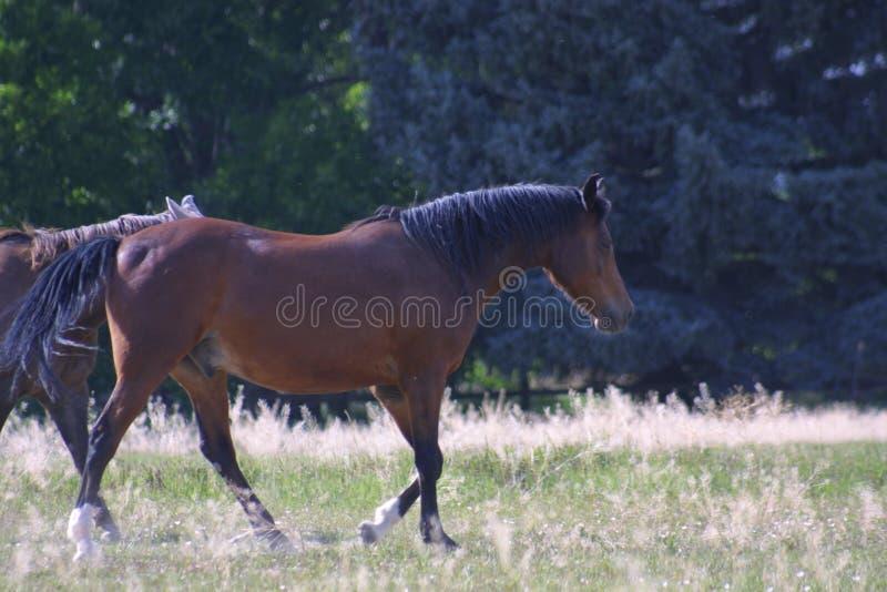 Ранчо 2019 лошади Колорадо стоковая фотография