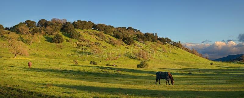 Ранчо лошади около Стэнфордского университета стоковые изображения rf