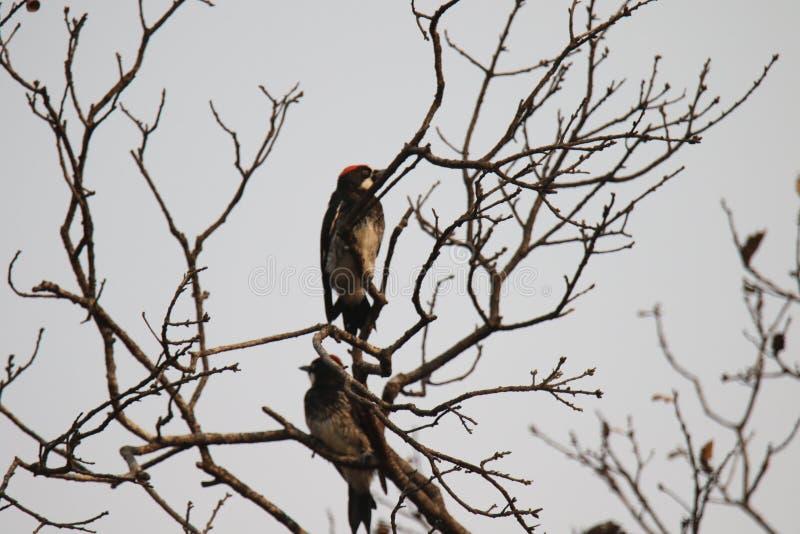 Ранчо Shiloh региональное парк включает полесья дуба, леса смешанных evergreens стоковые фото