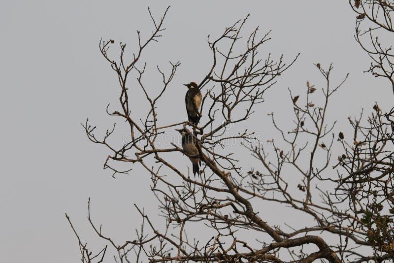 Ранчо Shiloh региональное парк включает полесья дуба, леса смешанных evergreens стоковые изображения