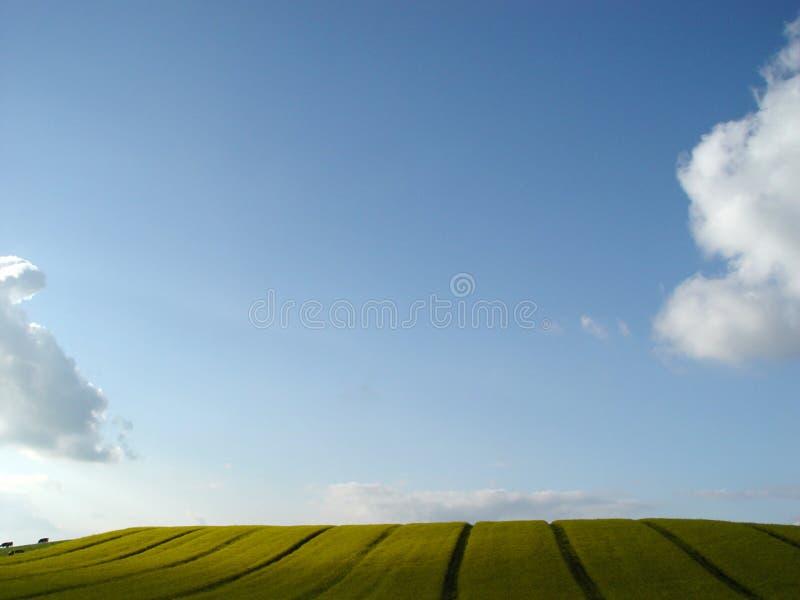 рапс панорамы Стоковое Изображение