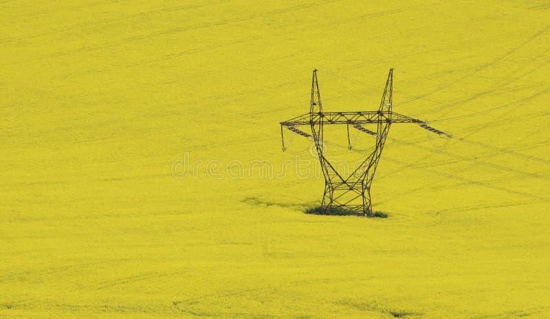 рапс поля стоковая фотография rf
