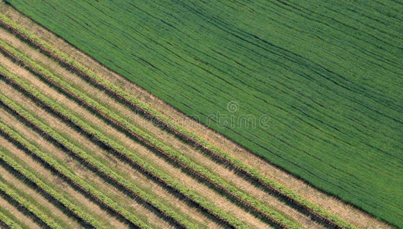 раскосное поле стоковое изображение