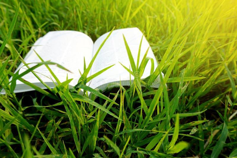 Раскройте библию книги на предпосылке зеленой травы стоковые изображения rf