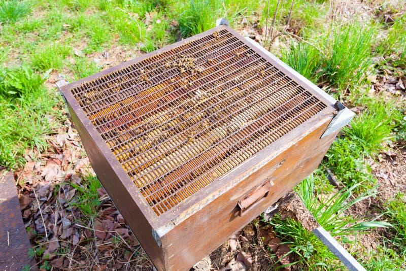 Раскройте крапивницу, пчеловодство стоковые фотографии rf