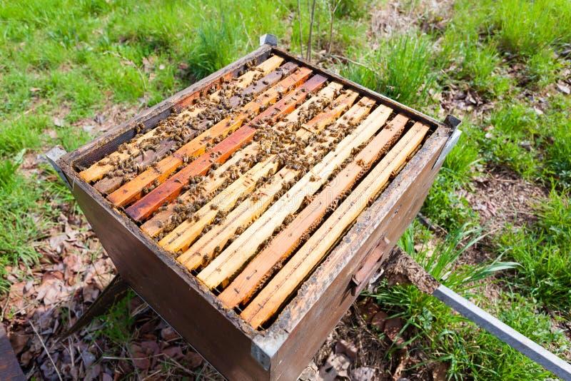Раскройте крапивницу, пчеловодство стоковая фотография