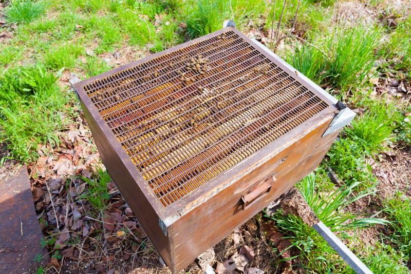 Раскройте крапивницу, пчеловодство стоковые изображения