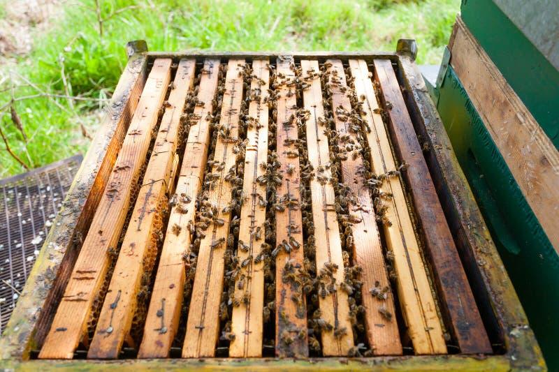 Раскройте крапивницу, пчеловодство стоковое фото rf