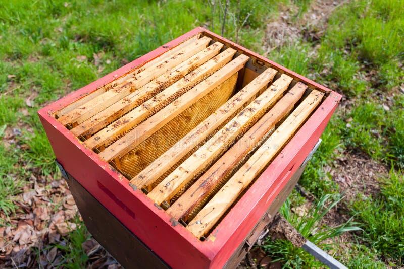 Раскройте крапивницу, пчеловодство стоковые изображения rf