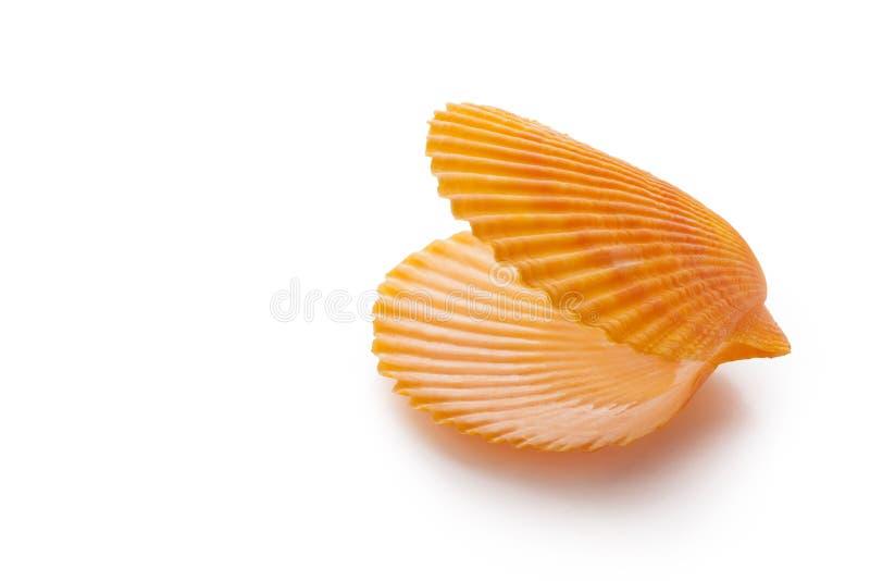 раскройте пустую раковину scallop стоковое изображение rf