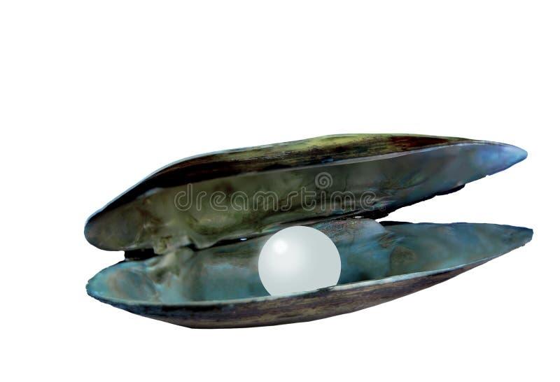 Раскройте раковину мат--жемчуга реки стоковые изображения rf