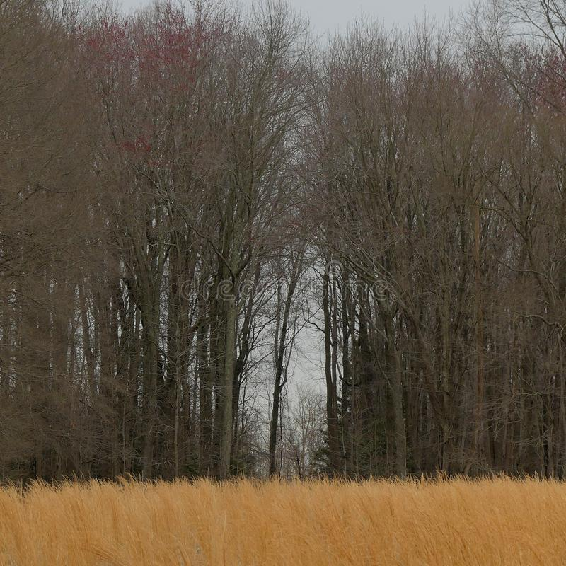 Раскрывать в стене деревьев стоковое изображение