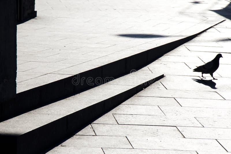 Расплывчатые силуэты и тень голубя на тротуаре улицы города с лестницами в черно-белом стоковые изображения