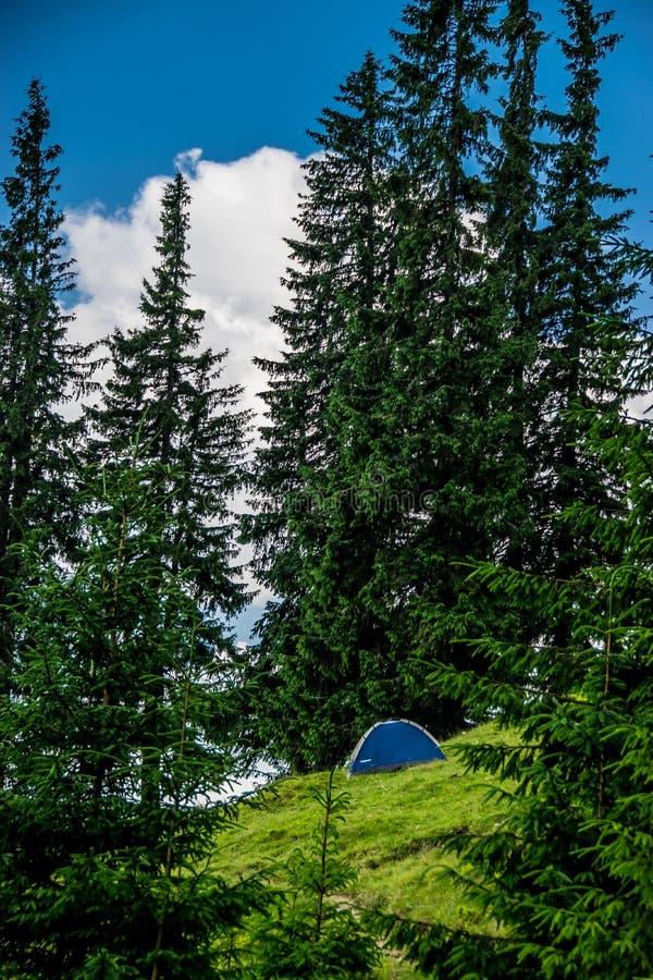 Располагаясь лагерем шатер лесом стоковые изображения rf