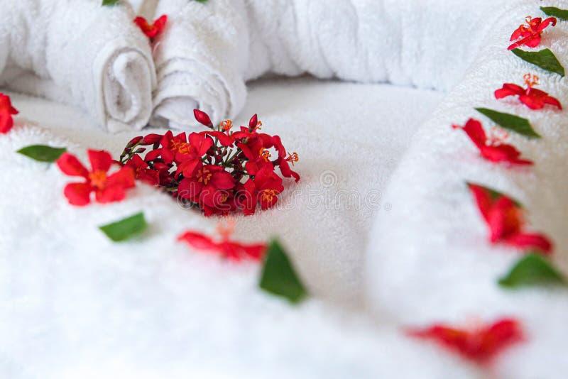 Расположение живых красных цветков на белом полотенце стоковые фото